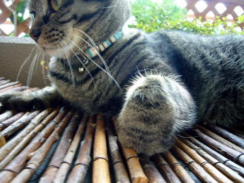 猫パンチ用意!