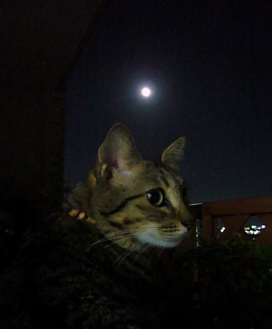 月とすもも