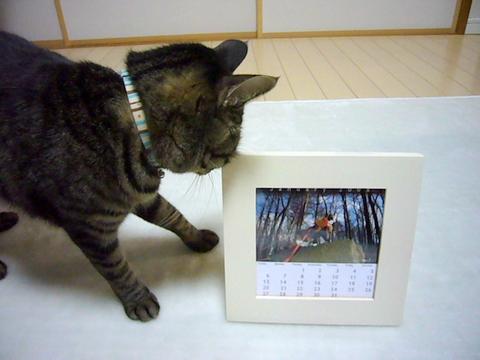 Gaviちゃんカレンダー♪