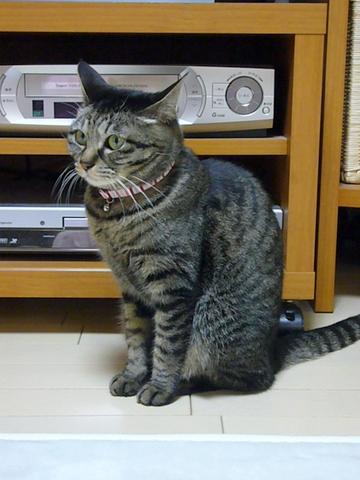 猫背なミュウ