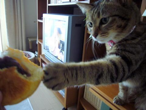 あんパンちょうだい