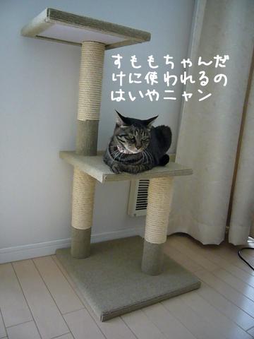 キャットタワーのミュウ1