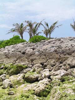 岩とヤシの木