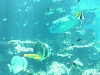 水族館・熱帯魚の海