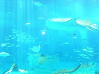 水族館・黒潮の海2