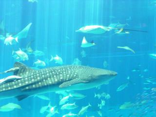 水族館・黒潮の海3