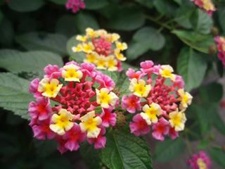 071021お花