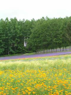 彩りの畑と林