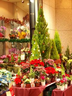 お花やさんのツリー