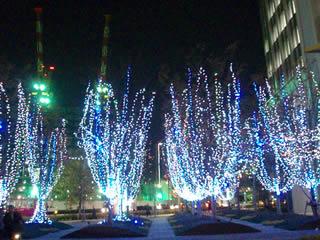 輝く樹たち