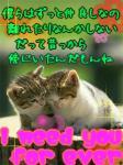 img_311034_1180014_0.jpg